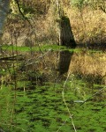 Chambers Creek Reflections